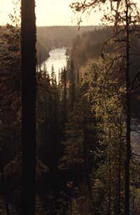 Risto Lammen luontokuva