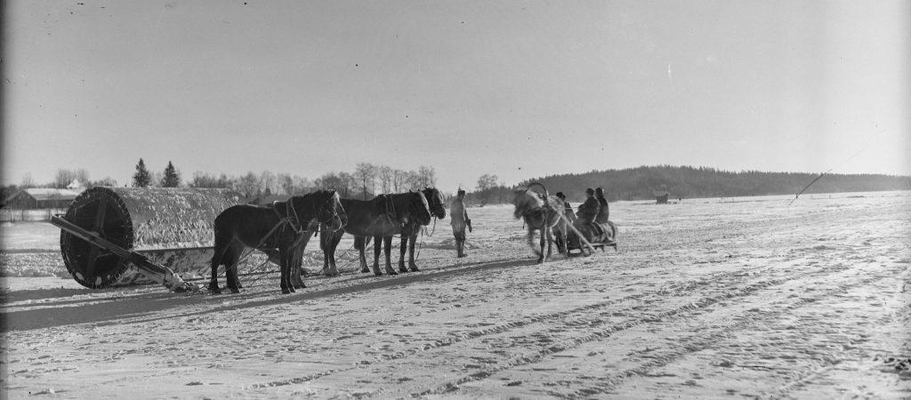 Hevosen vetävät jyrää Jukajärven jäällä lentokentän tasoittamiseksi.